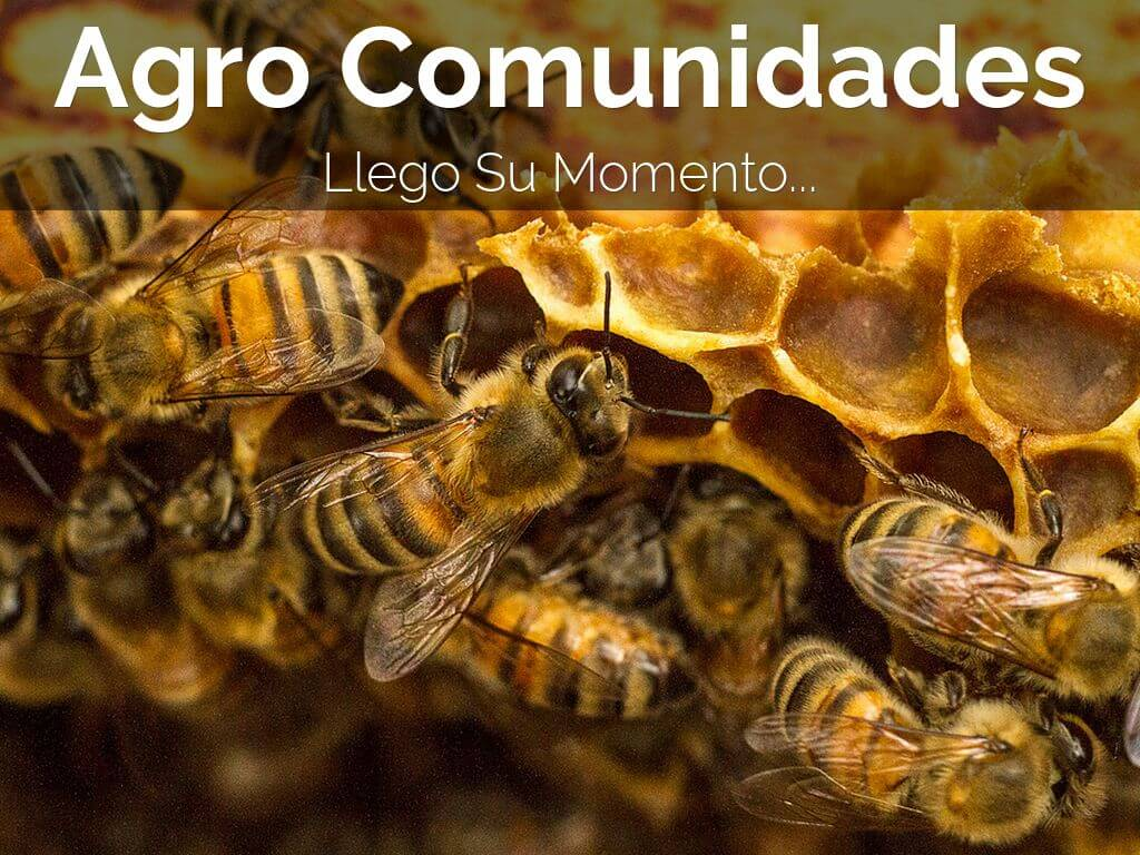 agro comunidades, marketing, agromarketing, bialar