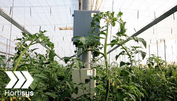 Producción Hortícola en Invernaderos