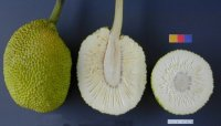 Frutipán-imagen