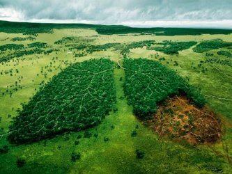 Contaminación de suelo y ambiente