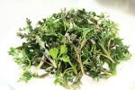 ajenjo-aromaticas-medicinales