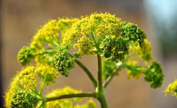 Plantas arom ticas y medicinales en maceta interior o - Plantas aromaticas interior ...