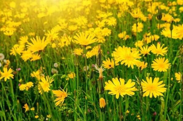Plantas arom ticas y medicinales en maceta interior o - Plantas aromaticas exterior ...