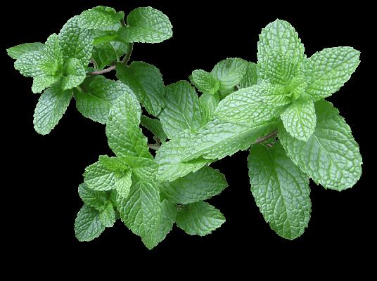 Plantas Aromaticas Y Medicinales En Maceta Interior O Exterior - Nombres-de-plantas-de-exterior