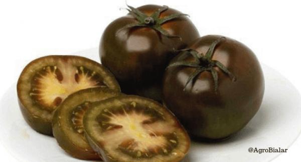 tomate negro kumato