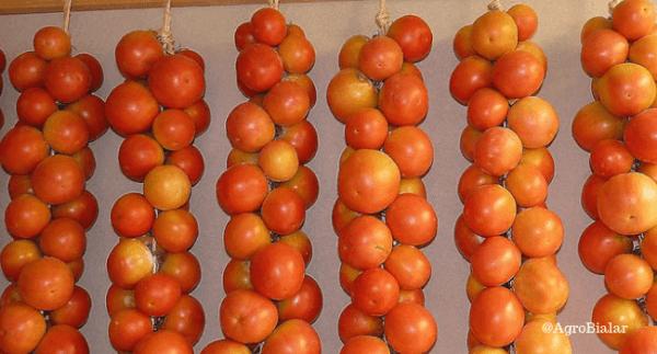 tomate para colgar