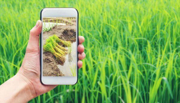 Agrointeligencia al Servicio del Agricultor. Digitalización del Agro