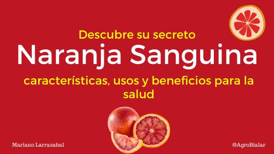 Naranja Sanguina Descubre sus características y beneficios para la salud