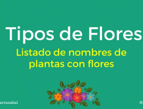 Tipos de Flores Hermosas que Existen. Listado de Nombres de Plantas Con Flores