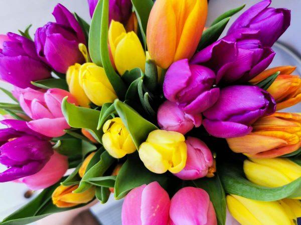 Características y cuidados de la flor de tulipán